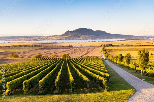 Autumn vineyards under Palava near Sonberk, South Moravia, Czech Republic Obraz na płótnie
