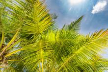 Fresh Green Tropical Palm Sway...