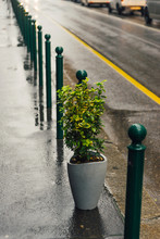 Photo Of Plant Standing On Str...