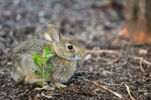 The Baby Rabbit Feeding Herbs