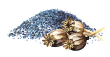 Blue Poppy Seeds And Dry Poppy  Heads. Hand Drawn Watercolor Illustration,  Isolated On White Background