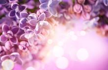 Lilac Flowers Bunch Violet Art...
