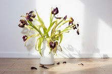 Wilted Tulips In A White Jug On A Wooden Floor Against A White Wall