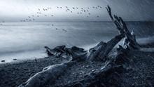 Rainy Day. Flying Birds. Depressed Nature Background.