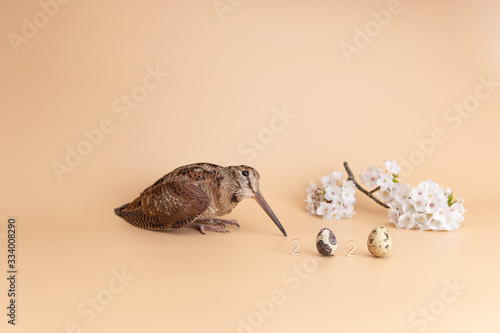 Easter 2020 quail eggs and woodcock Lerretsbilde