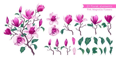 Botanical flowers set with Pink Magnolia. Isolated illustration element. Realistic illustration of a branch spring magnolia plant, large flowers and leaves. High detailed, hand drawn art.