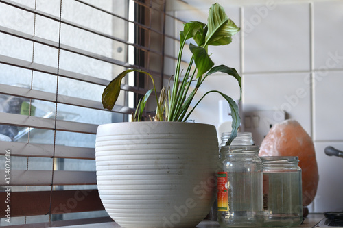 Obraz na plátně Wilting easter lily amongst assorted kitchen junk next to a window