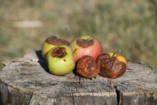 Rotten Apple. Defeat Apples. S...
