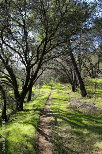 Forest trails and walkways