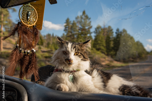 Gertie the adventure cat road tripping through the United States in a van Canvas Print