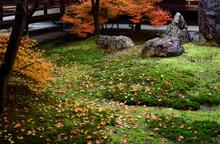 建仁寺、Kenninji In Spring...