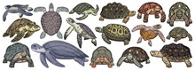 Sea Turtle Vector Cartoon Set Icon. Vector Illustration Tortoise On White Background. Isolate Cartoon Set Icon Sea Turtle.