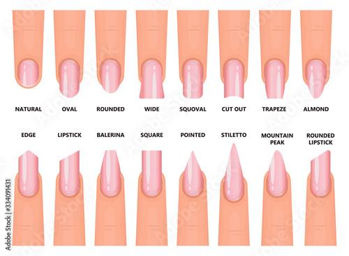 Fototapeta Shape nail vector illustration on white background