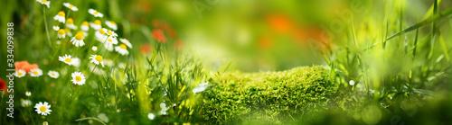 Photo Flower meadow in spring