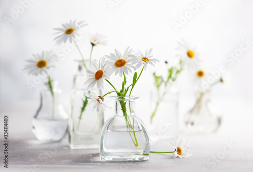 Fototapeta Beautiful daisy flowers in glass vases on light background. Floral composition in home interior. obraz