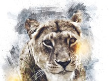 Lion Art Illustration Drawing ...