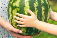 Whole Watermelon In Hands Of L...