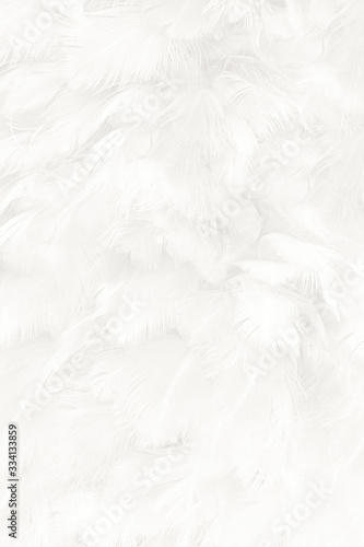 Beautiful white feather wooly pattern texture background Canvas Print