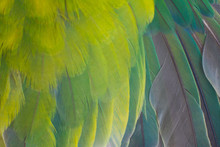 Close Up Beautiful Wing Parrot Lovebird Feather Texture Pattern Background