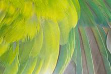 Close Up Beautiful Wing Parrot...
