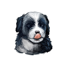 Bernedoodle Dog Cross Breed Of...