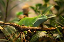 Gecko Du Zoo Artis à Amsterdam