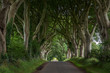 The Dark Hedges im Sommer - County Antrim, Nordirland