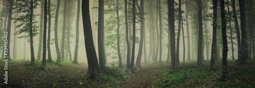 fog in green forest, forest panorama landscape Fototapeta