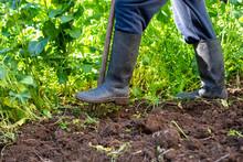 Man Is Digging Spring Soil Wit...