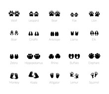 Footprints Of Animals