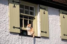 Cat On Window Cill