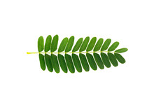Tamarind Leaves Isolated On Wh...