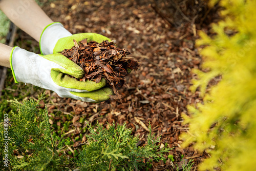 Fotografía mulching garden conifer bed with pine tree bark mulch