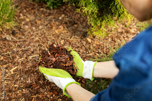 Tela mulching garden conifer bed with pine tree bark mulch