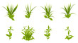 Set of realistic green grass and bushes isolated on white background. Objects for design. Vector illustration