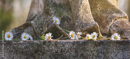 Obraz na plátně Gänseblümchen auf Stein zum Gedenken, Grußkarte, Frühling