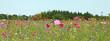 canvas print picture - Jachère fleurie