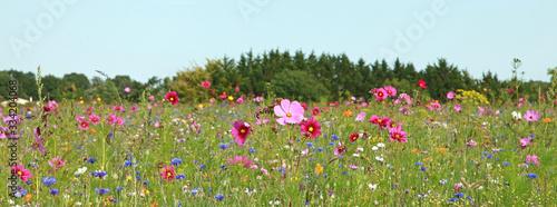 Fotografie, Obraz Jachère fleurie