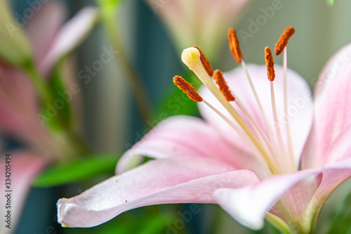 A close up of a flower showing the stamens, anthers and stigma Canvas Print
