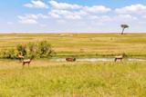 Fototapeta Sawanna - Waterbuck and Hartebeest at a water hole at the savanna in Masai Mara