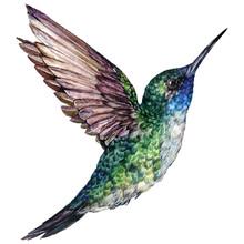 Watercolor Realistic Illustrat...