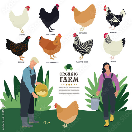 Stampa su Tela Set of eight breeds of domestic chicken Flat vector illustration of two farmers
