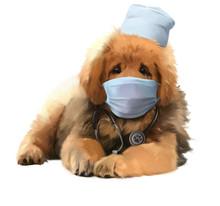 A Mastiff Dog In A Medical Mas...