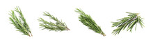 Set Of Fresh Green Rosemary On White Background