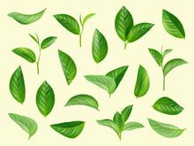 Green Leaves Set. Plants Natur...