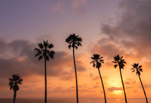 Silhouettes Of Palm Trees On A...