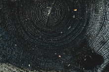 The Charred Stump Of Tree Felled - Section Of The Trunk With Annual Rings. Slice Burnt Wood.