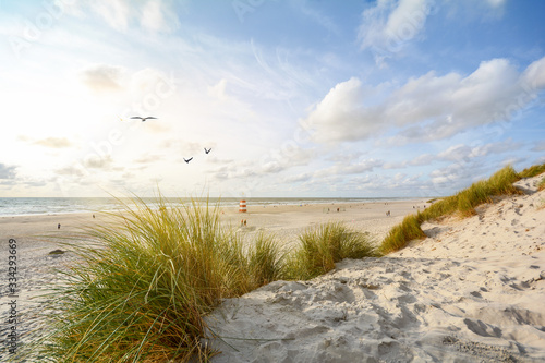 Fototapeta View to beautiful landscape with beach and sand dunes near Henne Strand, North s
