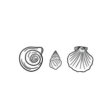 Three Beautiful Seashells Close-up On A White Background. Set Of Different Types Of Shells For Your Design. Isolated Objects.