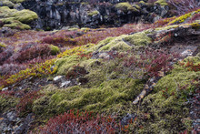 Lichen And Moss Make For Color...